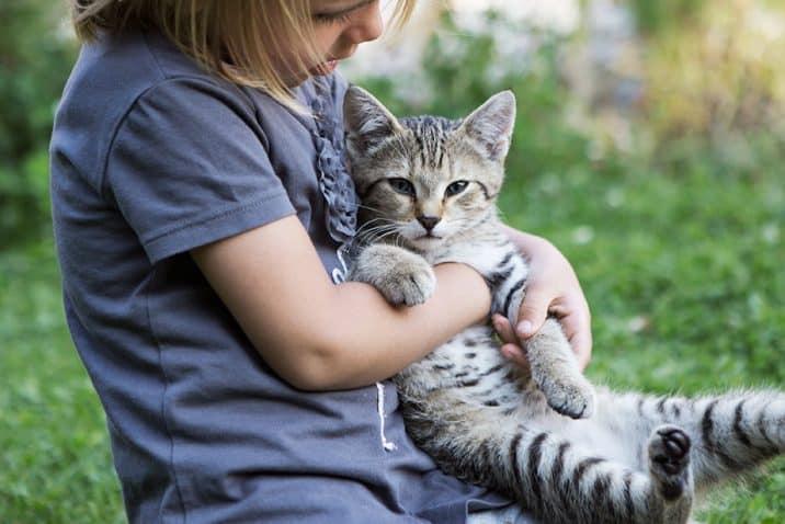 Holzlebn petting cat