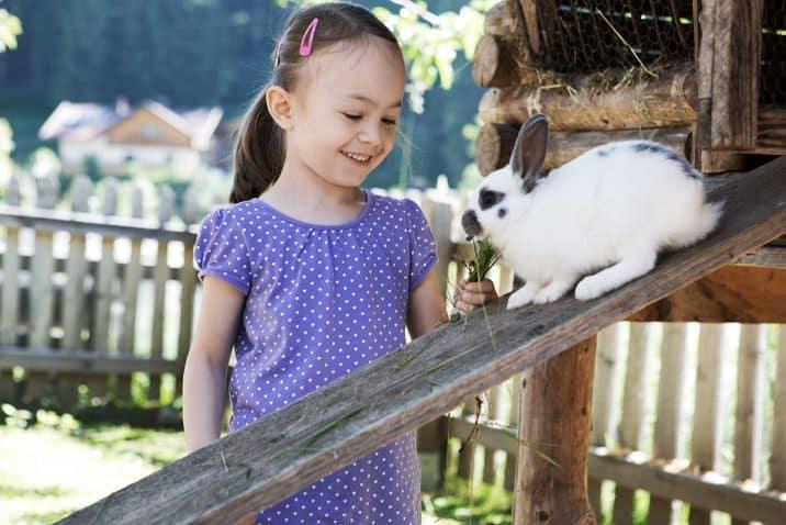 Holzlebn feeding rabbit